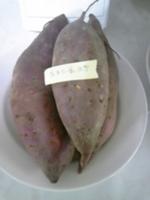 宮澤さんサツマイモ